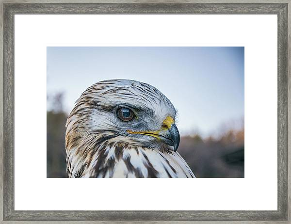 Framed Print featuring the photograph B2 by Joshua Able's Wildlife