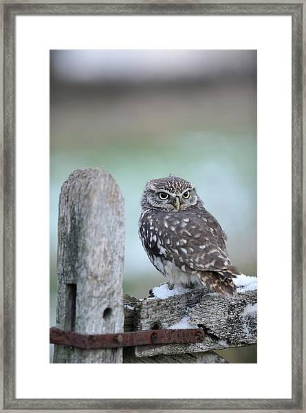 Wildlife Photography - Gloucester Barn Framed Print