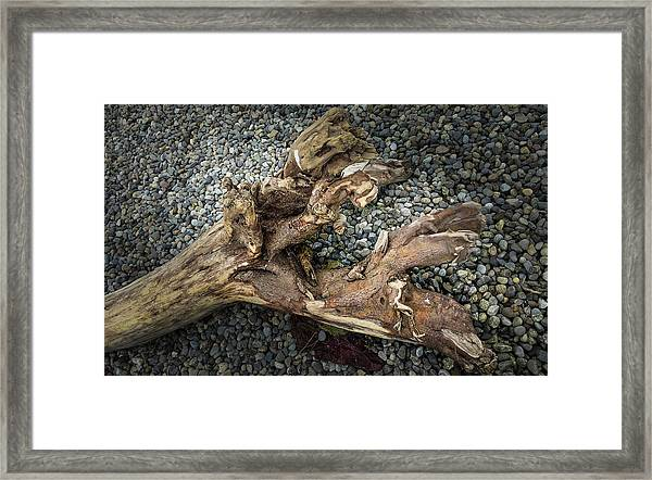 Framed Print featuring the photograph Wood Log In Nature No.39 by Juan Contreras
