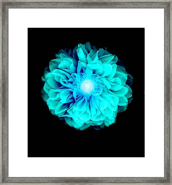 X-ray Like Image Of A Flower Framed Print
