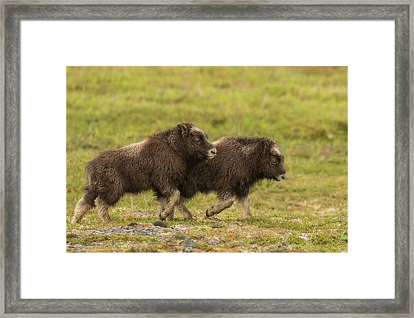 Usa, Alaska, Nome Framed Print by Jaynes Gallery