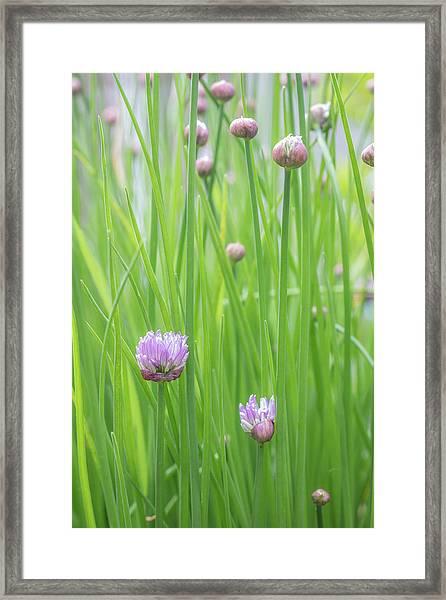 Usa, Washington State, Seabeck Framed Print