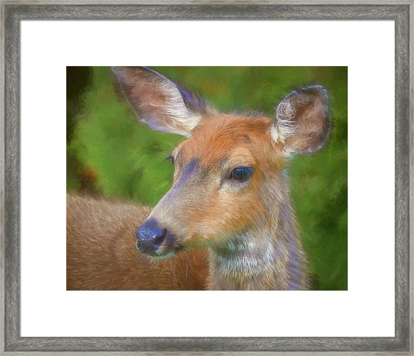 Usa, Washington State, Seabeck Framed Print by Jaynes Gallery