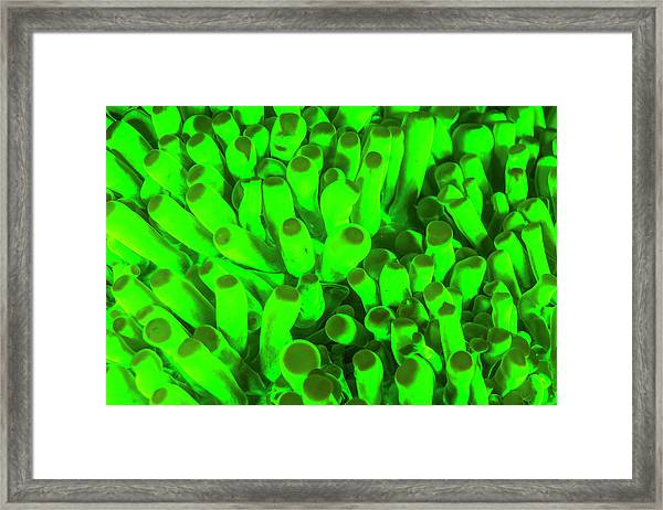 Natural Occurring Fluorescence Framed Print by Stuart Westmorland