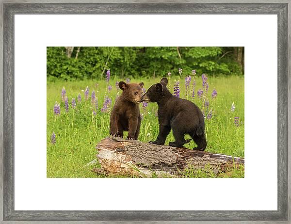 Usa, Minnesota, Minnesota Wildlife Framed Print by Jaynes Gallery