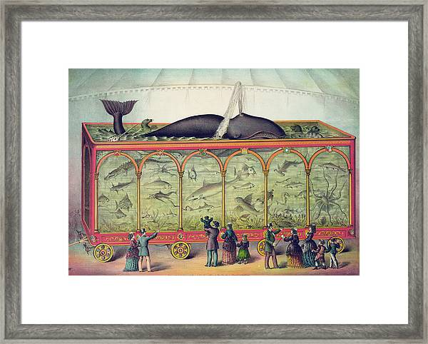 19th Century Circus Aquarium Framed Print