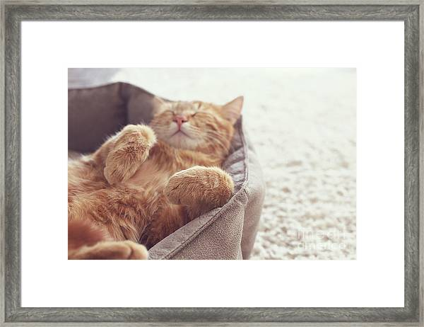 A Ginger Cat Sleeps In His Soft Cozy Framed Print
