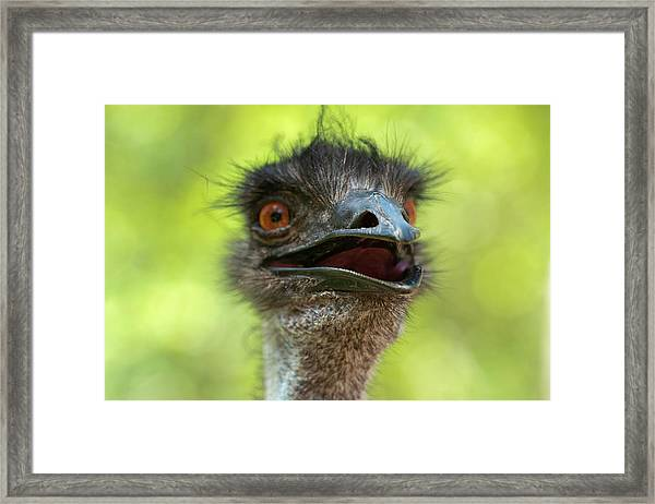 Framed Print featuring the photograph Australian Emu Outdoors by Rob D Imagery