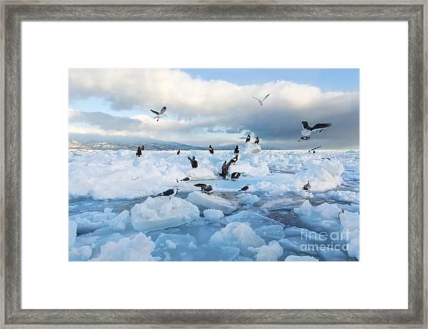 Drift Ice In Shiretoko, Hokkaido, Japan Framed Print