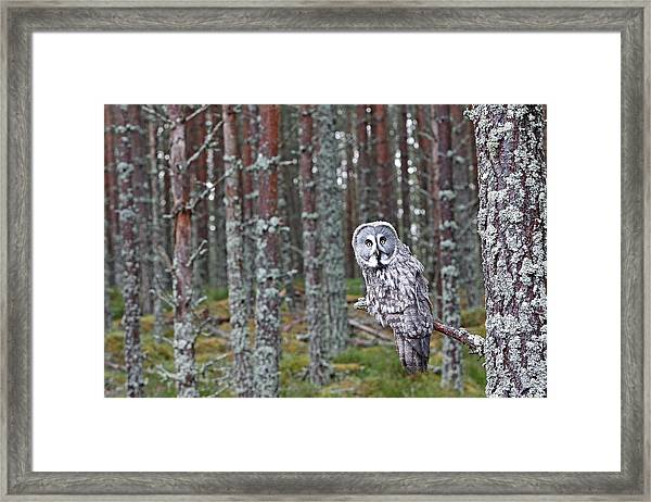 Finland, Lapland Province, Kuusamo Framed Print