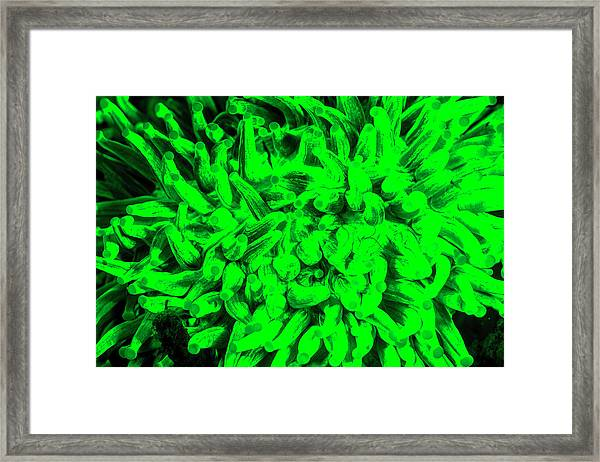Natural Occurring Fluorescence Emitted Framed Print by Stuart Westmorland