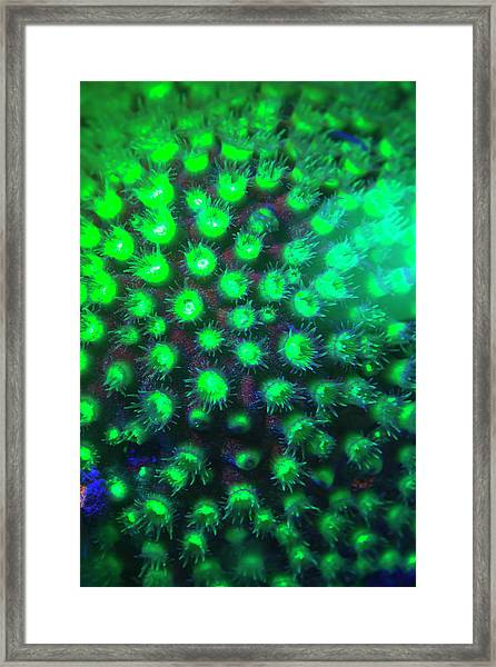Night Dive At Barrier Reef Near Saint Framed Print by Stuart Westmorland