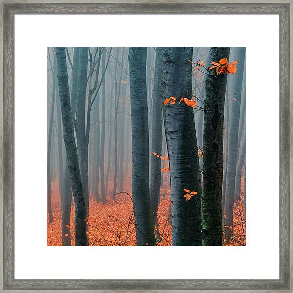 Orange Wood Framed Print