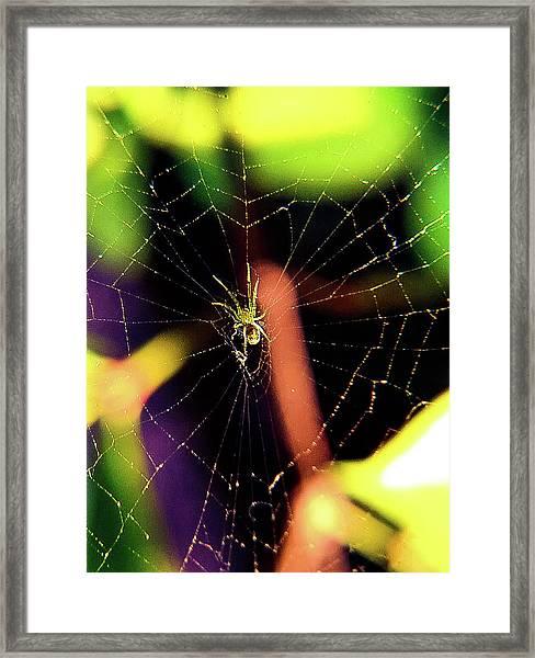 Web Of Hearts Framed Print