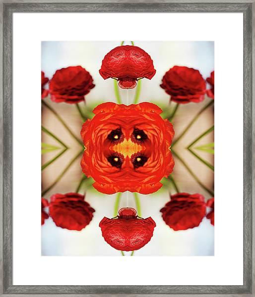 Ranunculus Flower Framed Print