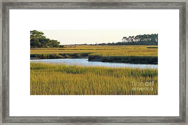 South Carolina Salt Marsh Framed Print