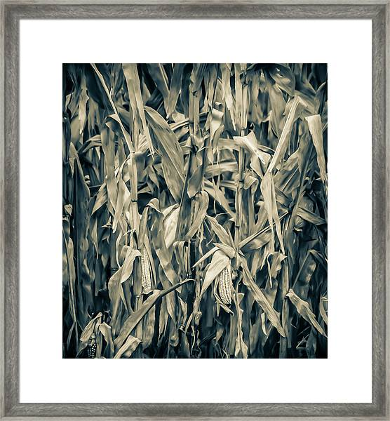 2018 Corn Framed Print