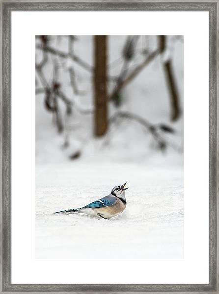 2019 First Snow Fall Framed Print