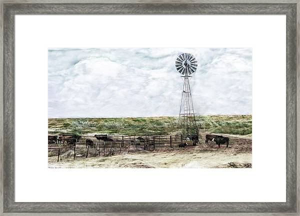Classic Cattle II Framed Print