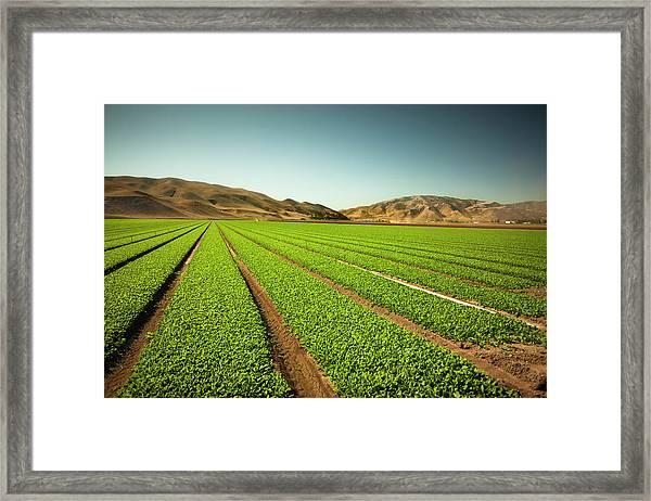 Crops Grow On Fertile Farm Land Framed Print