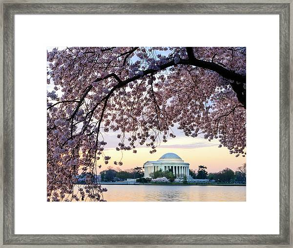 Jefferson Memorial Framed By Cherry Framed Print by Ogphoto