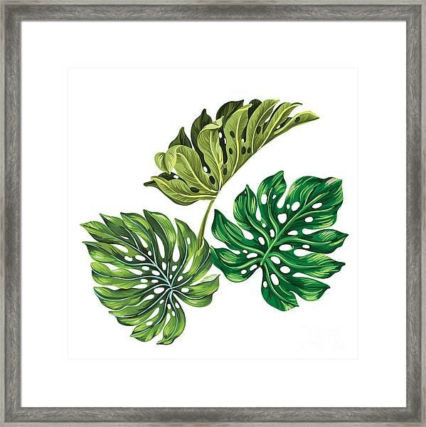 3 Vector Tropical Palm Leaves Framed Print