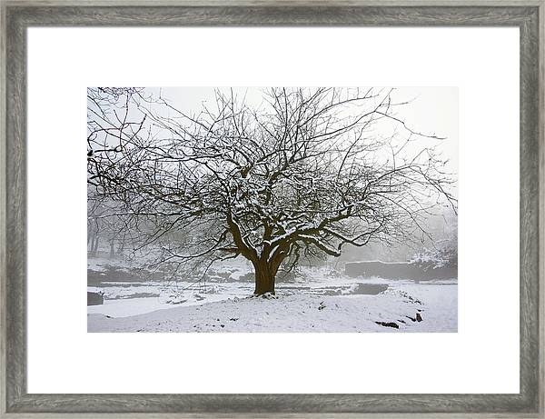 30/01/19  Rivington.  Japanese Pool. Snow Clad Tree. Framed Print