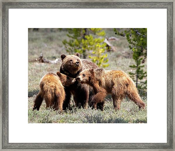 399 And Cubs Framed Print