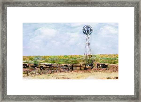 Classic Cattle  Framed Print