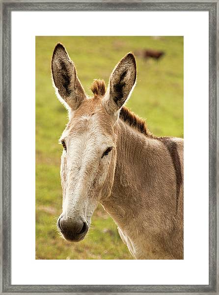 Framed Print featuring the photograph Donkey Out In Nature by Rob D Imagery