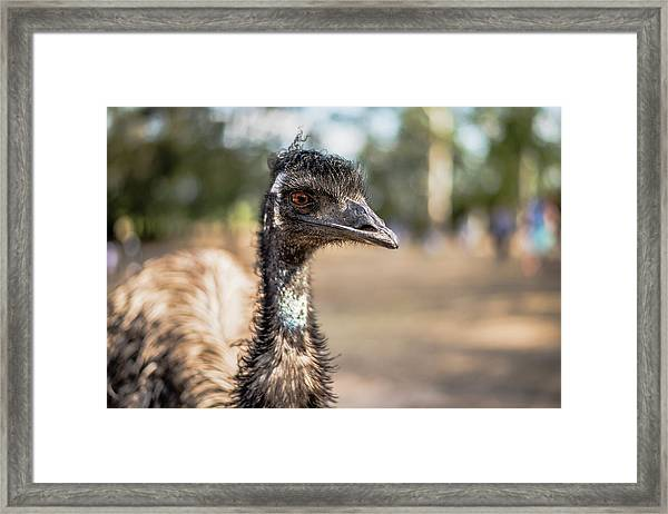 Framed Print featuring the photograph Emu By Itself Outdoors During The Daytime by Rob D Imagery