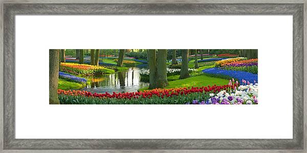 Spring Flowers In A Park Framed Print
