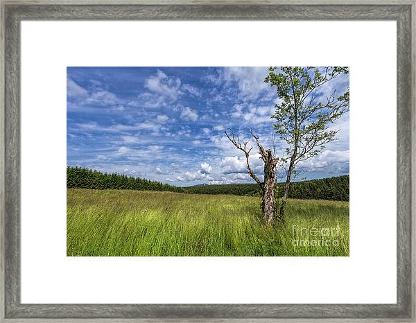 The Harz National Park Framed Print