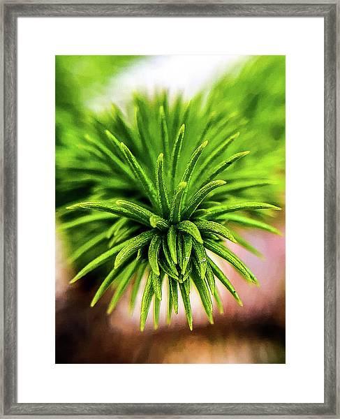 Green Spines Framed Print