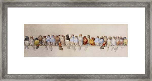 A Perch Of Birds  Framed Print