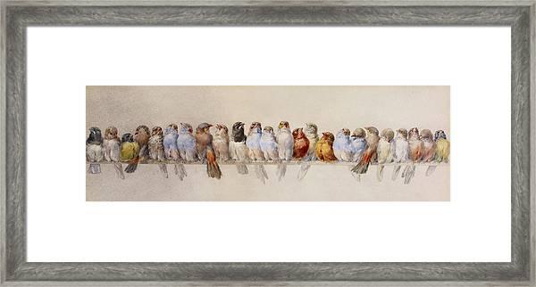 A Perch Of Birds  Framed Print