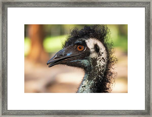 Framed Print featuring the photograph Emu By Itself Outdoors During The Daytime. by Rob D Imagery