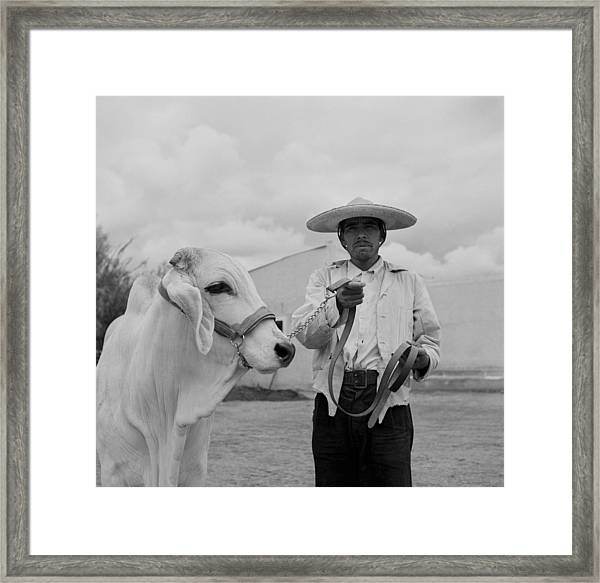 Ranching In Michoacan, Mexico Framed Print by Michael Ochs Archives