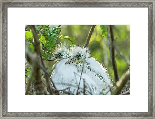 Usa, Louisiana, Miller's Lake Framed Print by Jaynes Gallery