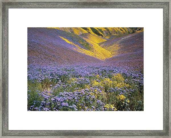 Usa, California, Carrizo Plain National Framed Print by Charles Gurche