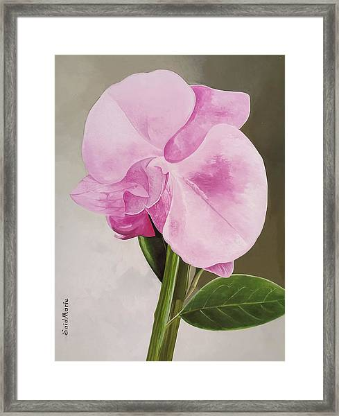 Framed Print featuring the painting A Beautiful Rose by Said Marie