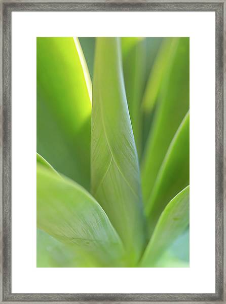 A Bouquet Of Leaves Framed Print
