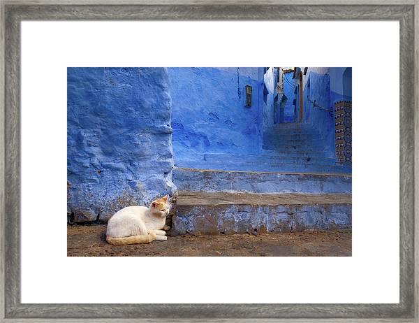 A Cat In Chefchaouen Framed Print