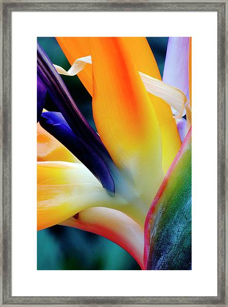 A Close-up Of A Flower Of A Bird Of Framed Print by Eromaze