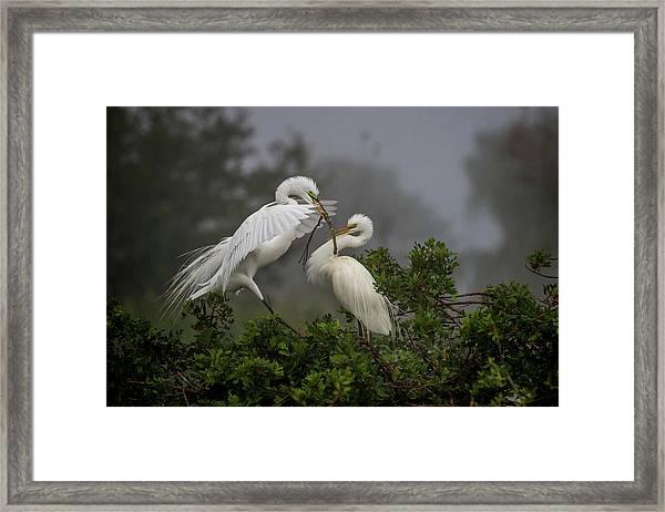 A Couple Of Birds Framed Print