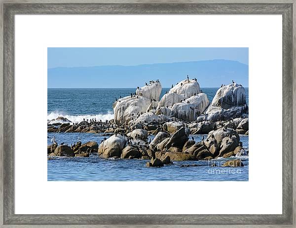 A Crowded Bird Rock Framed Print