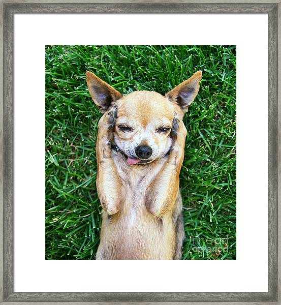 A Cute Chihuahua With His Paws On His Framed Print