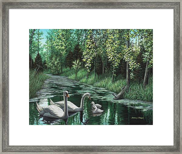 A Day Out Framed Print