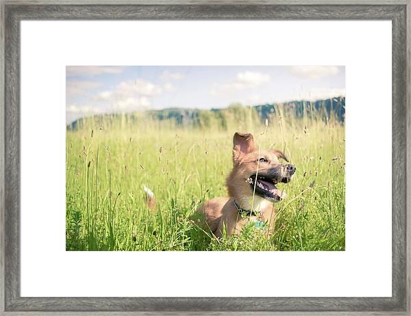 A Dog In The Park Framed Print