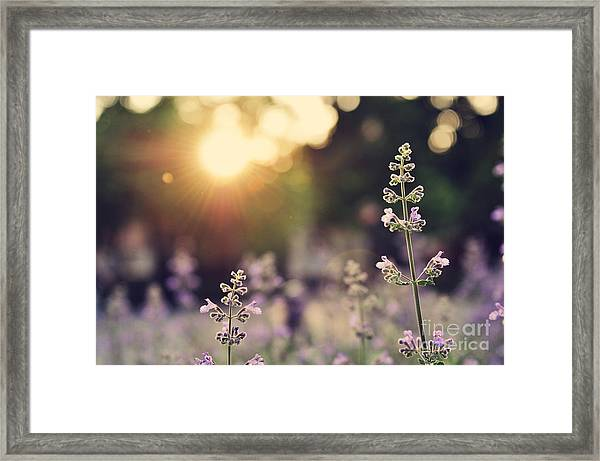 A Field Of Lavender Flowers During Framed Print
